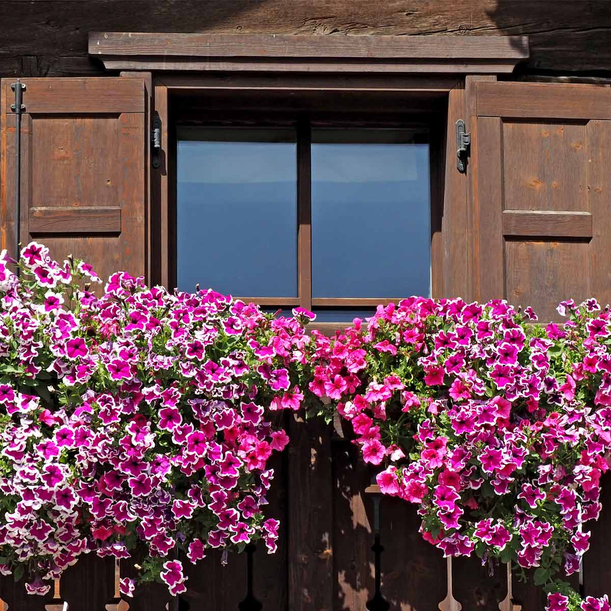 Balconi Fioriti In Estate: Leggi I Consigli Del Garden La Primula