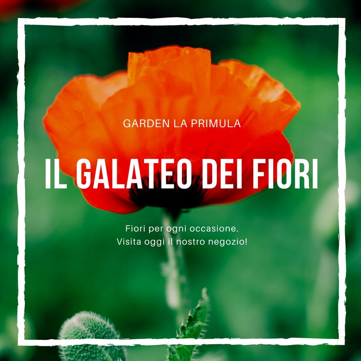 Garrden La Primula Galateo Dei Fiori