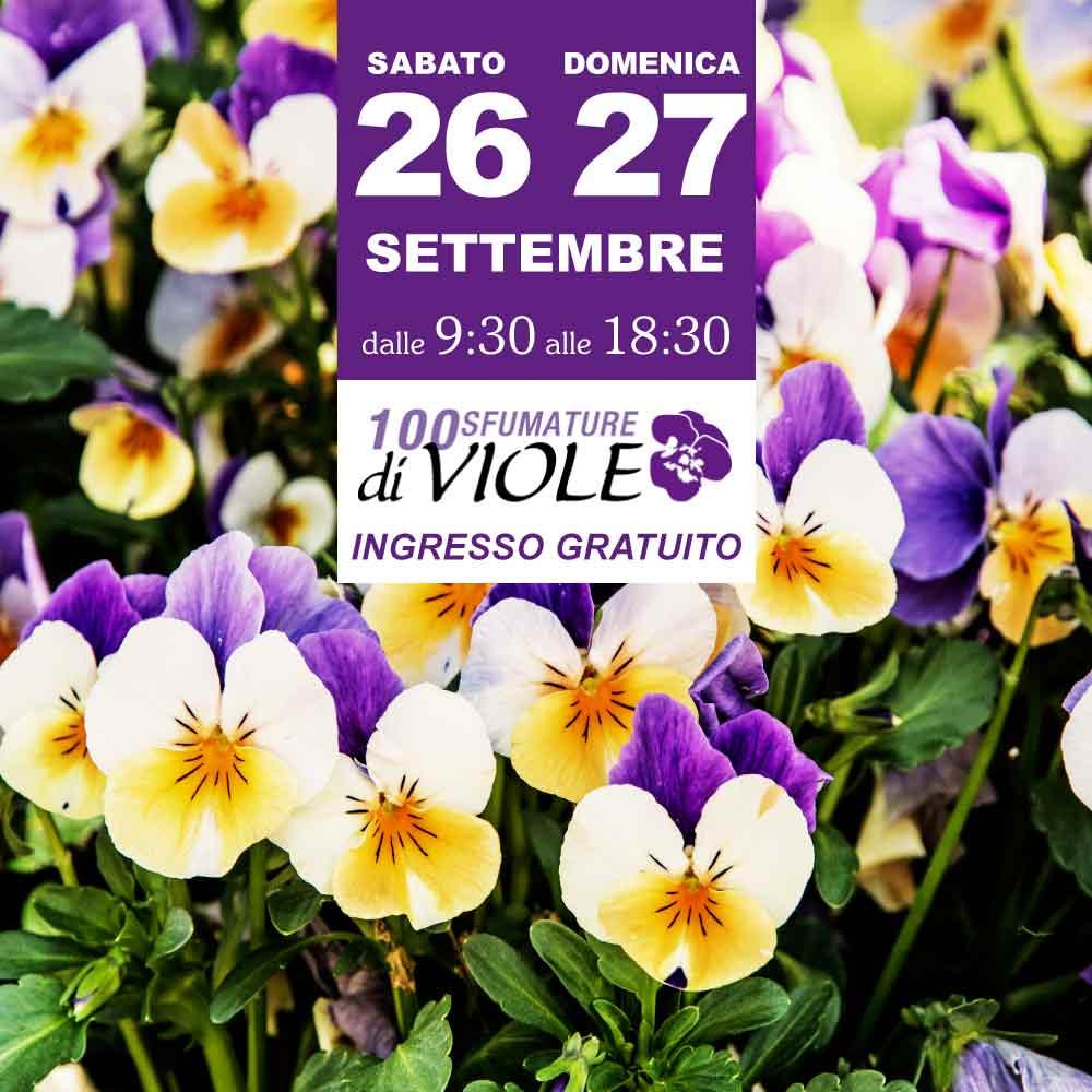 Garden La Primula Siziano Mostra 100 Sfumature Di Viole