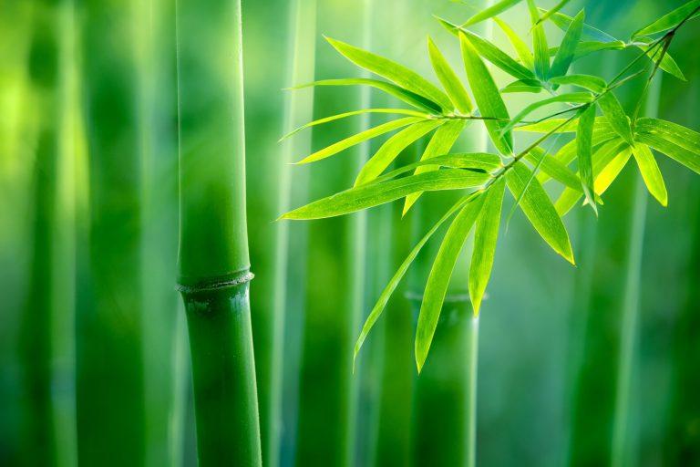 Piante per il bagno bamboo