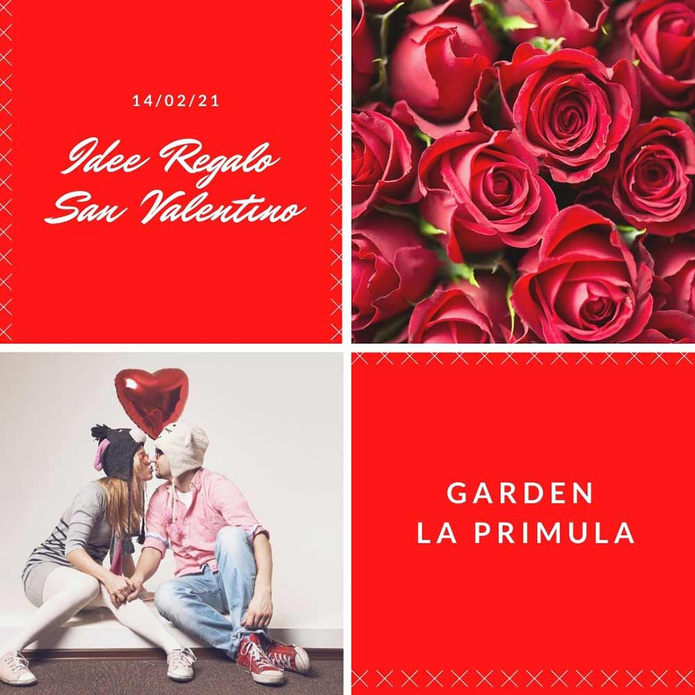San Valentino Garden La Primula
