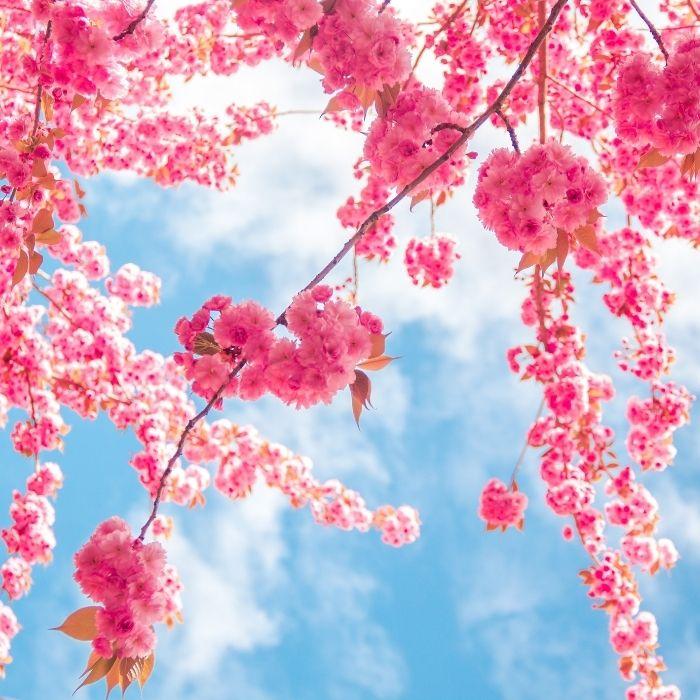 10 Piante Che Fioriscono In Primavera