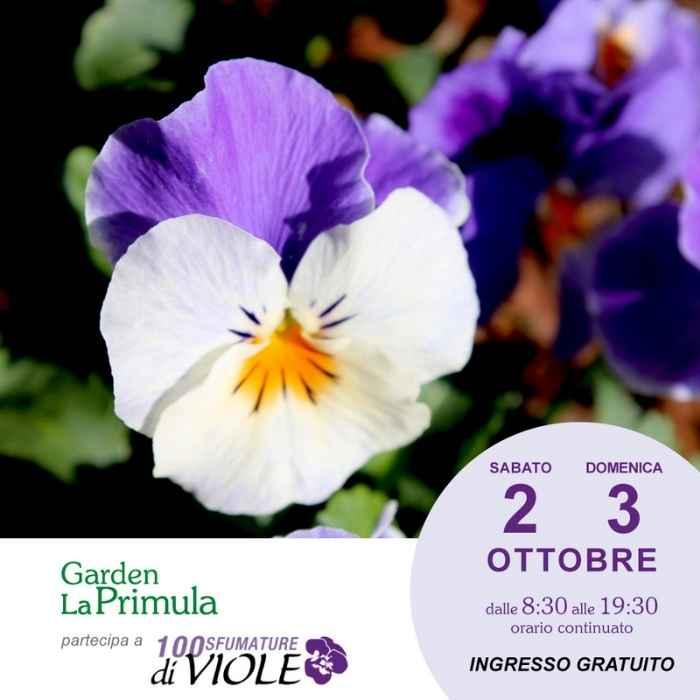 Garden La Primula Mostra Viole 2021